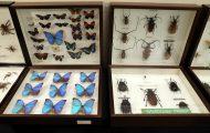 アマゾンの昆虫たち