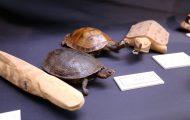 リクガメとリクガメの木彫り