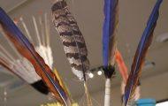 ルリコンゴウインコや鮮やかな黄色のオオツリスドリの羽根