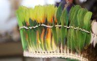 さまざまな種類のインコの羽根を使用