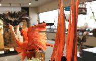 蔓の台に黒いホウカンチョウの羽根と赤いコンゴウインコの羽根を付けた