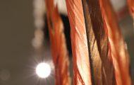 赤いコンゴウインコの羽根が美しい
